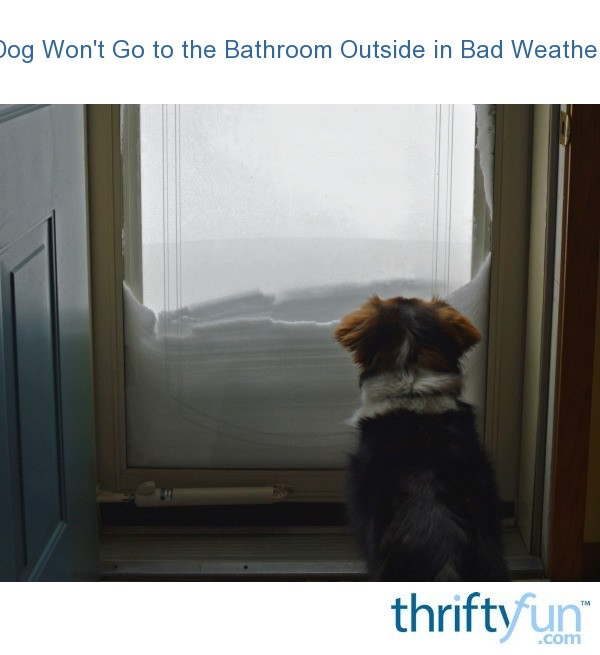 Dog won 39 t go to the bathroom outside in bad weather thriftyfun for Training dogs to go to the bathroom outside