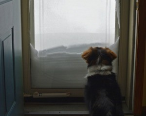 Medium sized dog sitting inside of a glass door staring at the snow piled on the other side