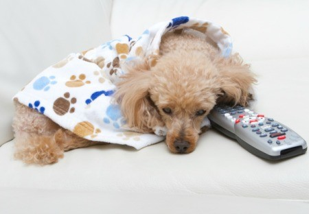 Sad looking dog wearing white, blue, and brown coat curled up on white chair with head down on TV remote.