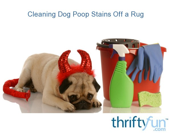 Cleaning Dog Poop Stains Off A Rug Thriftyfun