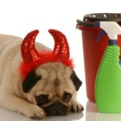 Pug puppy wearing devil horns and tail costume laying with head down next to cleaning bucket with rubber gloves, sponges, and various cleaning supplies