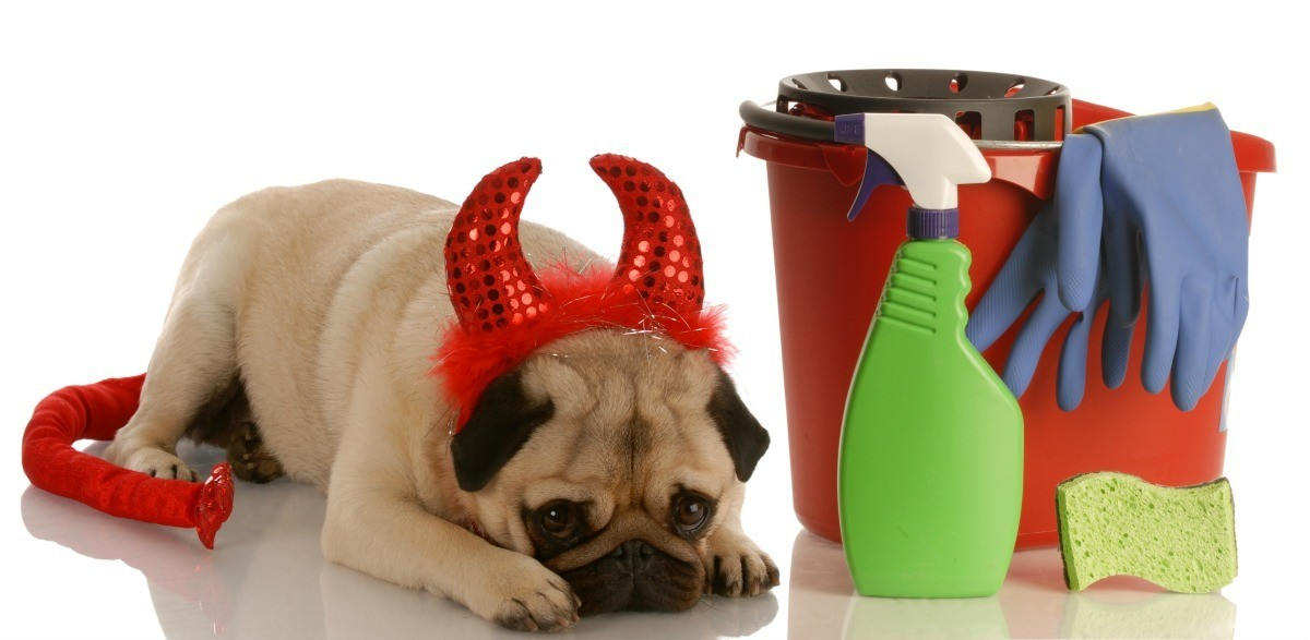 Pug Puppy Wearing Devil Horns And Tail Costume Laying With Head Down Next To Cleaning Bucket