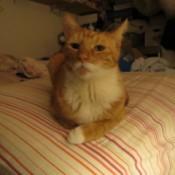 My Male Neutered Cat Keeps Spraying
