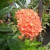 closeup of orange pentad