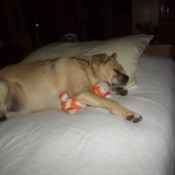 Wally sleeping with toy