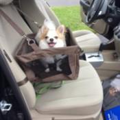 Tucker in car seat