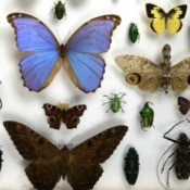 Mounted insects including beetles, moths, and cocoons against a white background