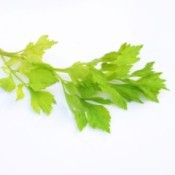 Drying Celery Leaves