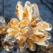 A close up of a hibiscus plant covered in ice.