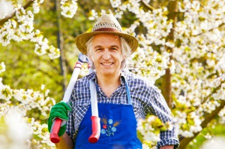 Man holding pruning sheers surrounded by cherry trees in bloom