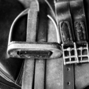 Close up black and white or horse tack (saddle, stirrup, etc)