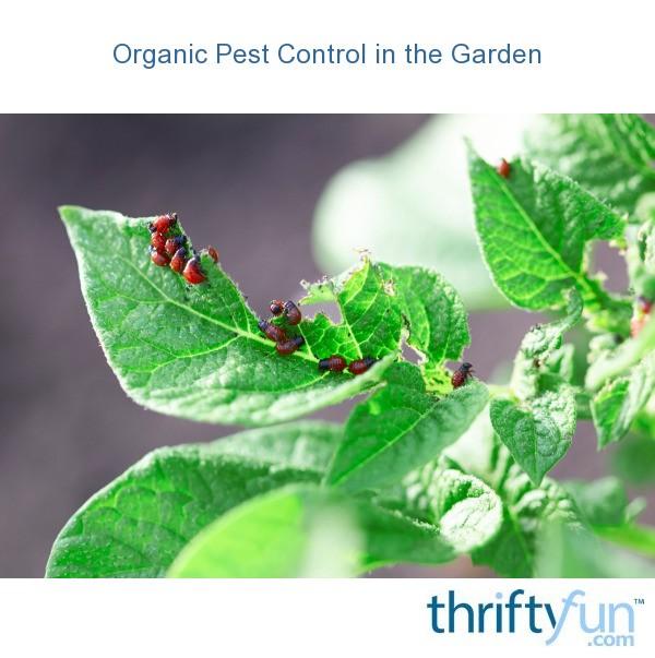 Organic Pest Control In The Garden
