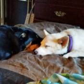 Dakota and Willow