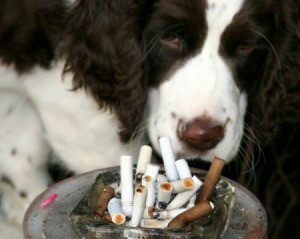 Dog curled up behind an ashtray full of cigarette butts.
