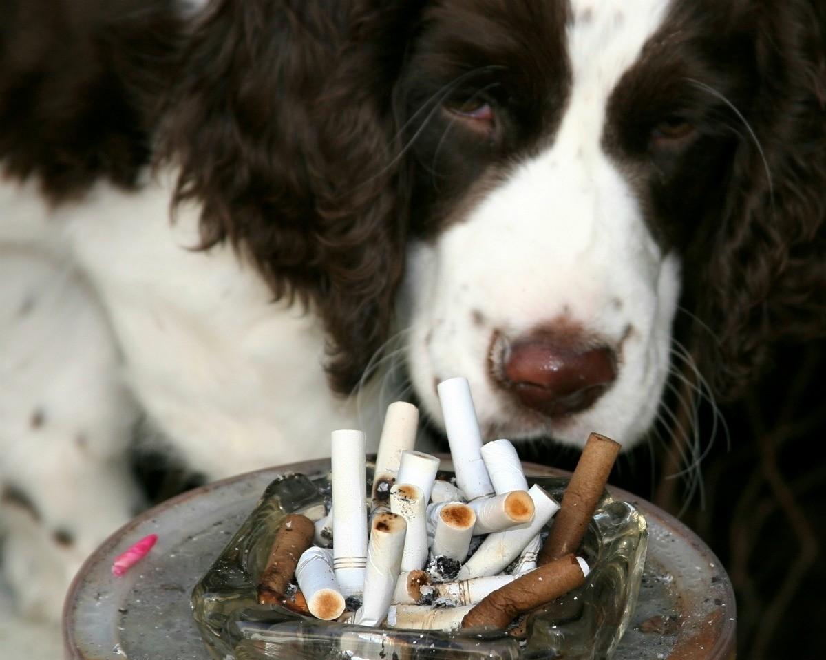 фото животные с сигаретой декоративных элементов