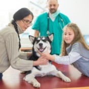 Mother and daughter comforting a young smiling husky as vet looks on