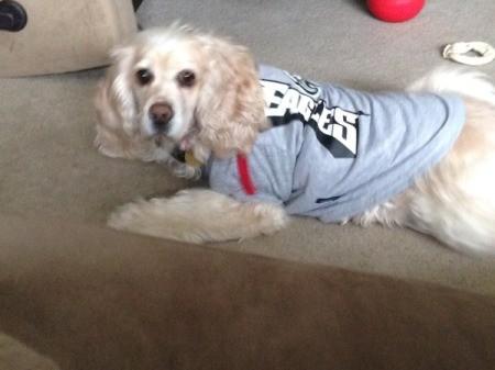 dog wearing a sweater