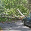 Car stopped in front of a downed tree across the road.
