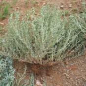 Killing Weeds in Rocks