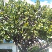 tree with medium green leaves