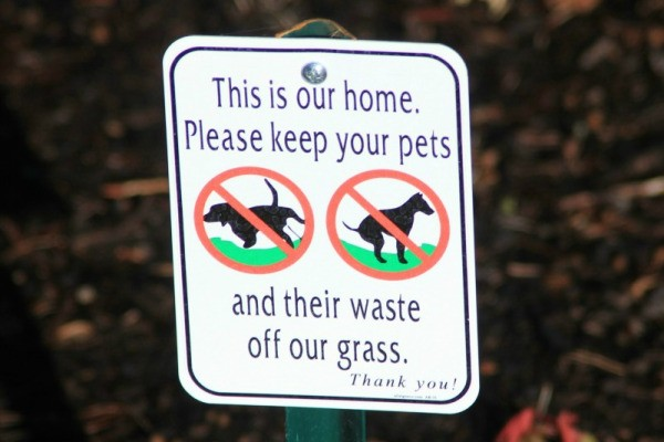 Is Dog Poop Bad For Your Grass Thriftyfun
