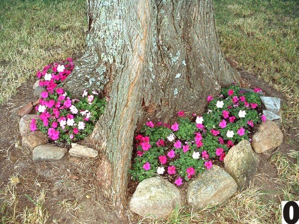 impatiens growing around a tree