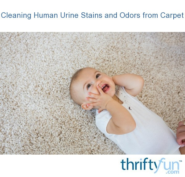 how to clean human urine from couch