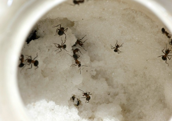 Getting Rid of Small Black Ants | ThriftyFun