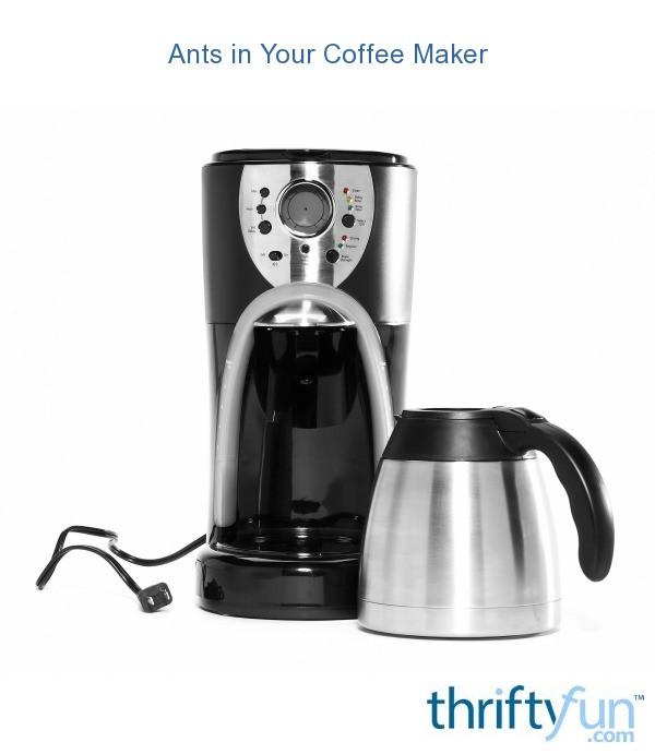 ants in coffee maker fancy1 Ants In My Coffee Maker