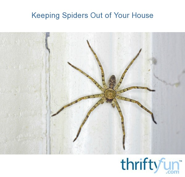 Keeping spiders out of your house thriftyfun for How to keep spiders out of the house