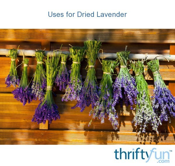 Uses For Dried Lavender Thriftyfun