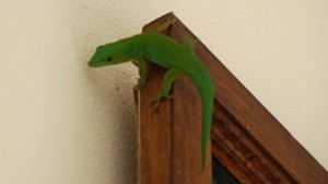 Geen gecko on the upper corner of a wooden doorframe against a white wall