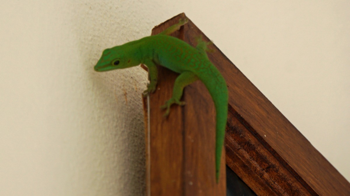 Preventing Lizards from Getting in Your House | ThriftyFun