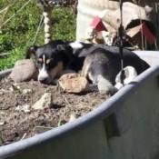 Avasun laying in the dirt