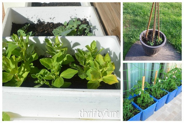 Growing Vegetables In Containers Thriftyfun