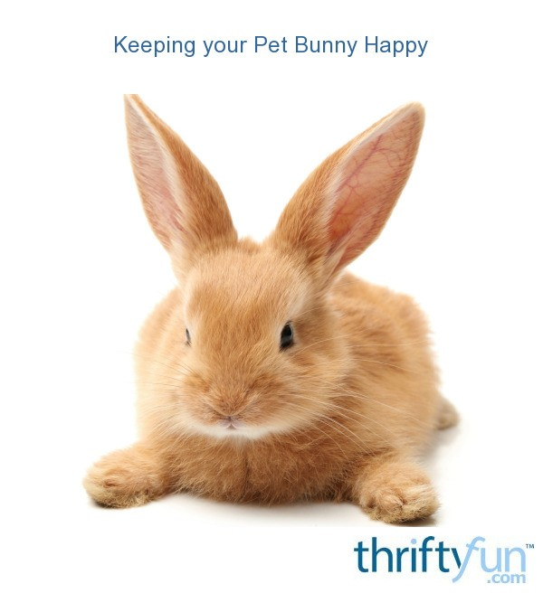 Keeping Your Pet Bunny Happy Thriftyfun
