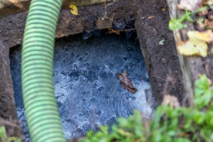 Using Brewer's Yeast in a Septic System