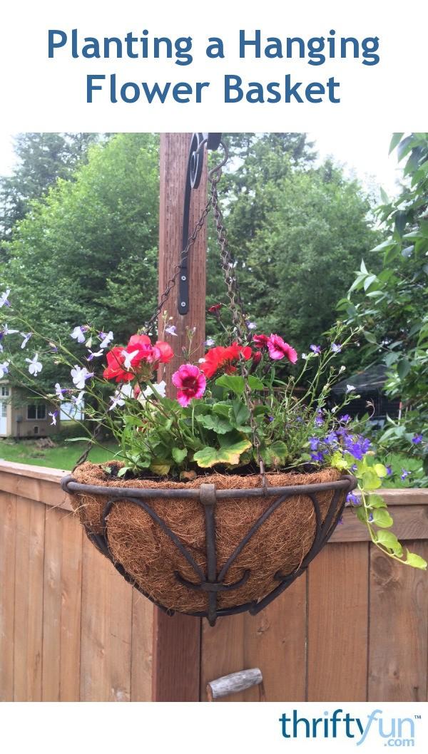 Planting A Hanging Flower Basket Thriftyfun
