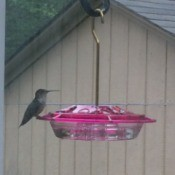 Homemade Hummingbird Food