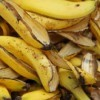 Close up of a pile of banana peels