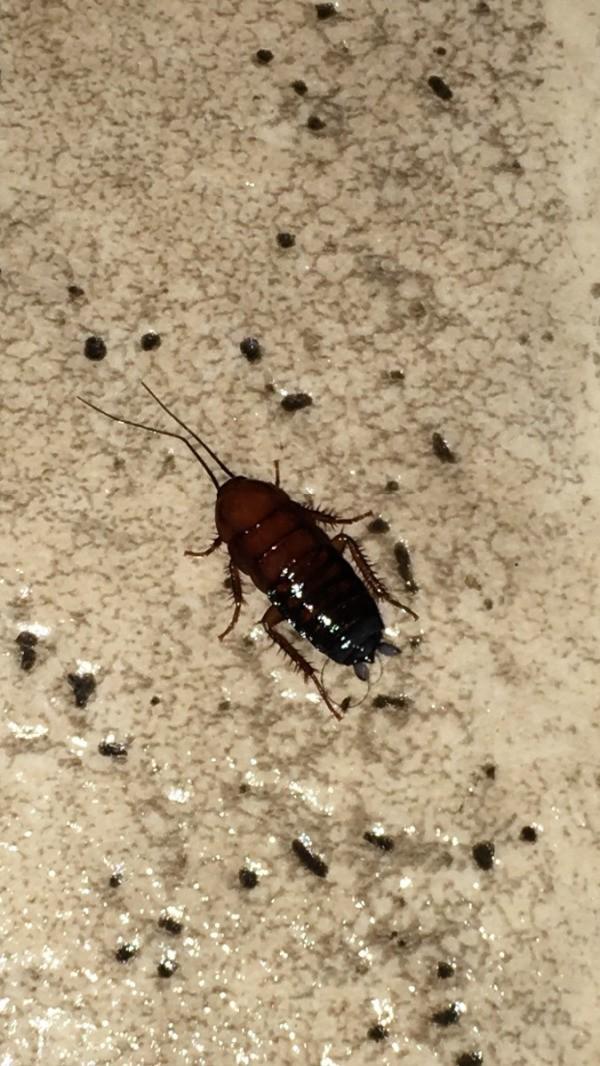 Identifying Bugs In The Kitchen Thriftyfun