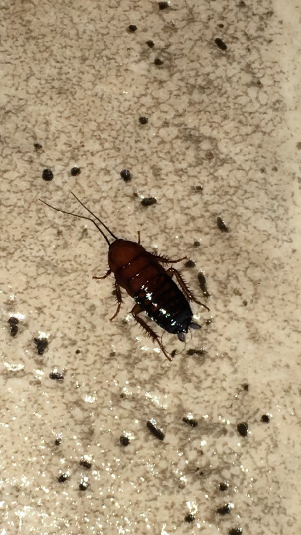Identifying Bugs In The Kitchen