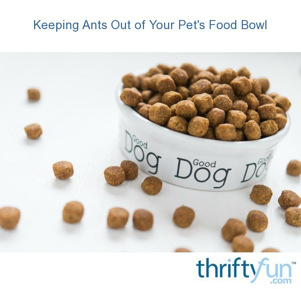 How To Keep Ants Out Of Dog Food Outside