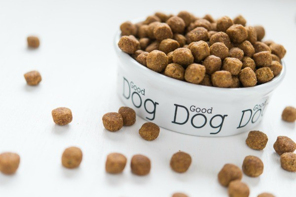 How To Keep Slugs Out Of Dog Food