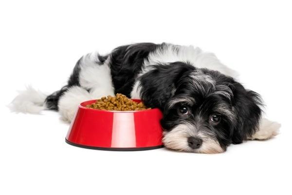 Dog Spayed Won T Eat