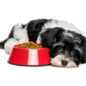 Small dog looking sad next to a red bowl of dog food.