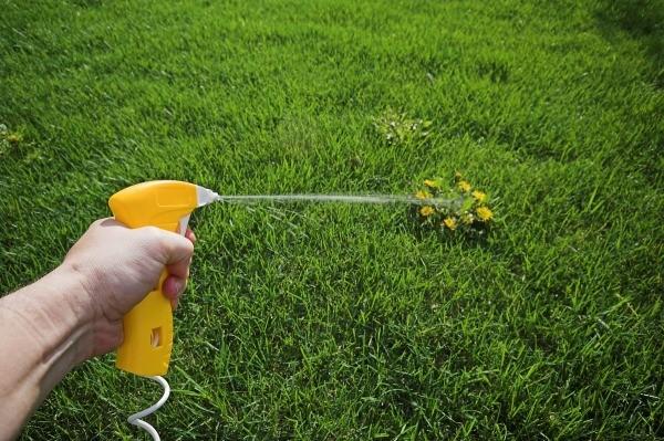 Weed Killer that Won't Kill Grass | ThriftyFun
