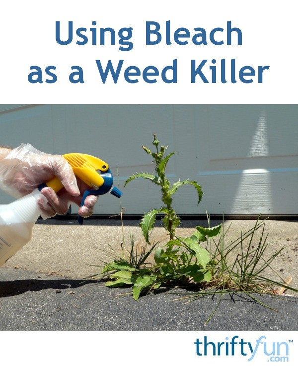 Using Bleach as a Weed Killer | ThriftyFun