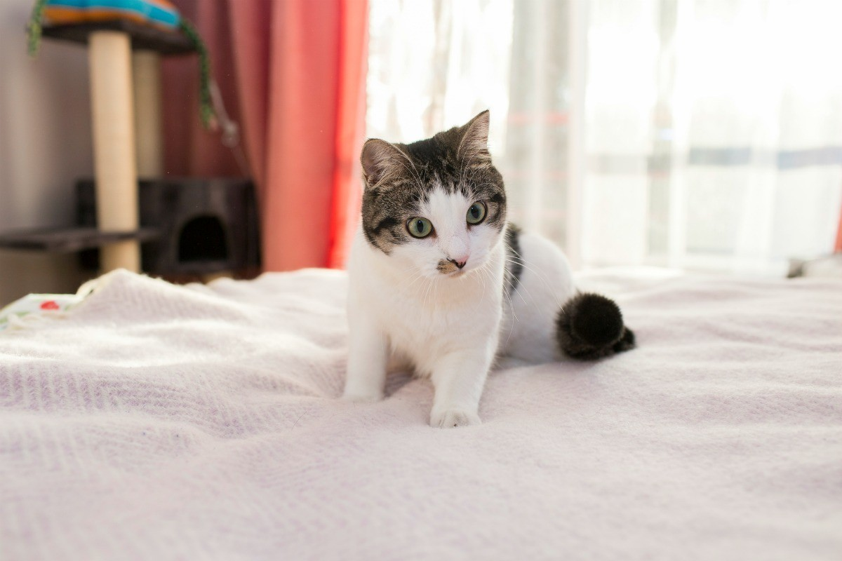 Keeping Cats from Peeing on Furniture | ThriftyFun