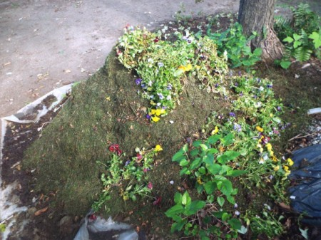 Spent Pansies on mulch pile